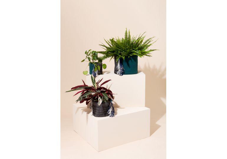 Cache Pot Bora Bora Bleu Vert L